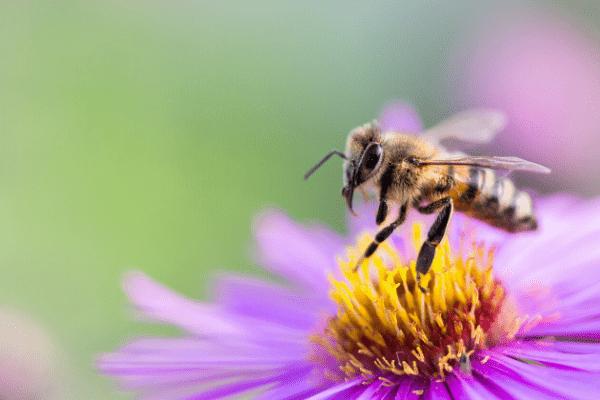 emballage en cire d'abeille réutilisable