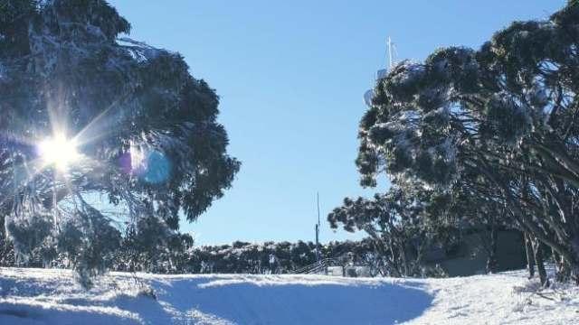australian cold