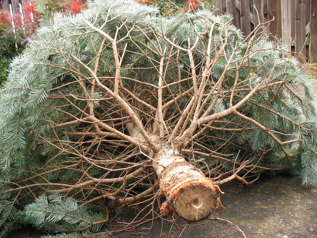dead christmas tree www.electroverse.net