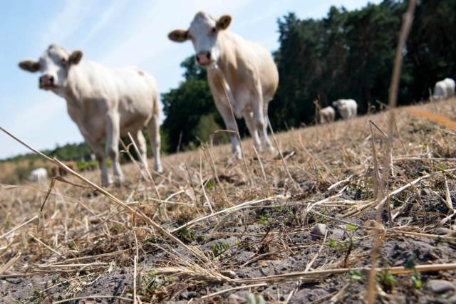 german drought milk www.electroverse.net