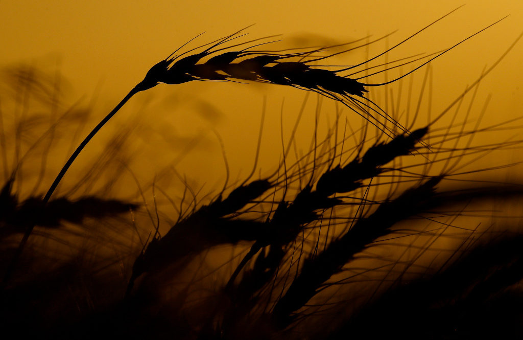 Drought, Rains, and Record Cold Deliver Dismal Grain Harvest for the Ukraine and Russia