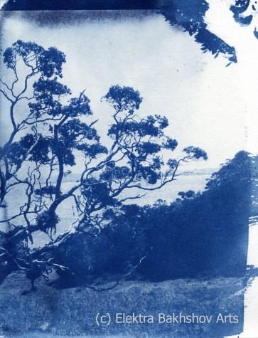 Peach Cove Cyanotype