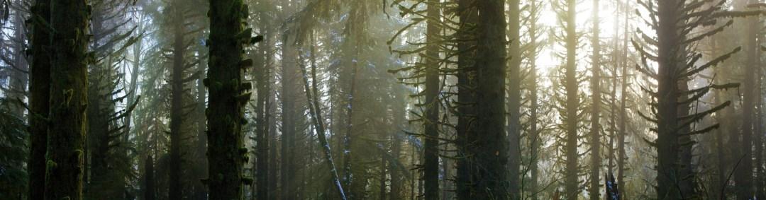 trees riding enduro downhill mountain bike forest