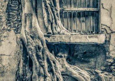 Nature Prevails, a new Ei platform