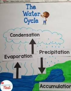 Free water cycle labels activities and lesson ideas with  freebie science also teaching resources rh elementarynest
