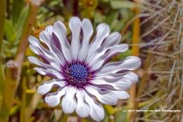 flower10jan15-3