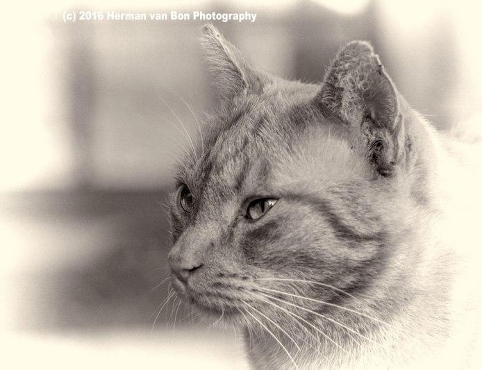 Portrait-of-Garfield3