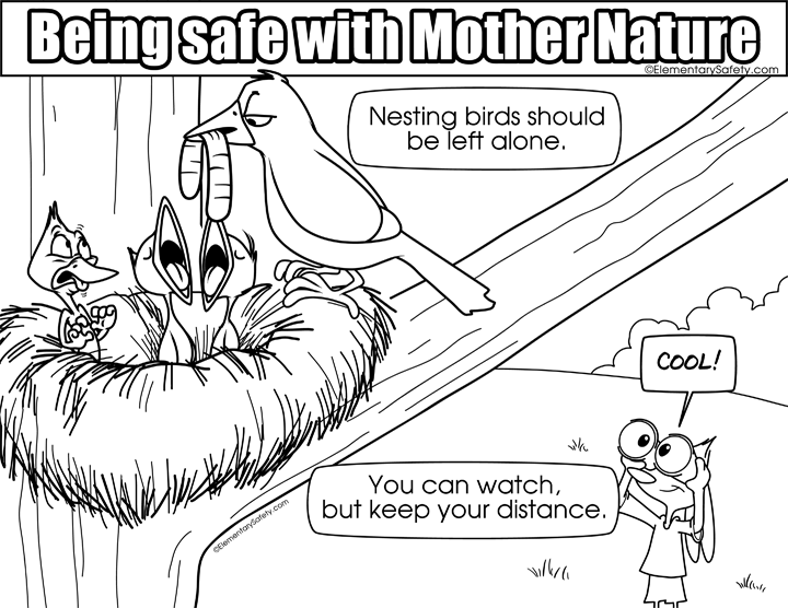 Nesting Bird Safety • Coloring Mother Nature Safety