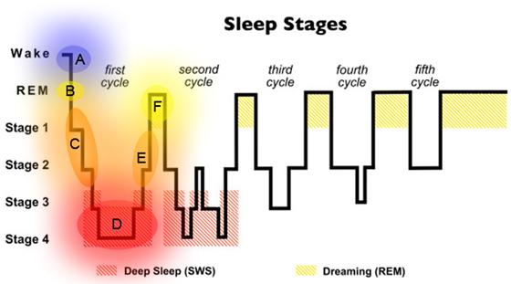 Normal Sleep Cycle Diagram Spirit Alchemy Articles Sleep And Dreams In Anthroposophy