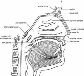 Elements of Morphology: Human Malformation Terminology