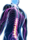 elements_osteopathy_humanspine