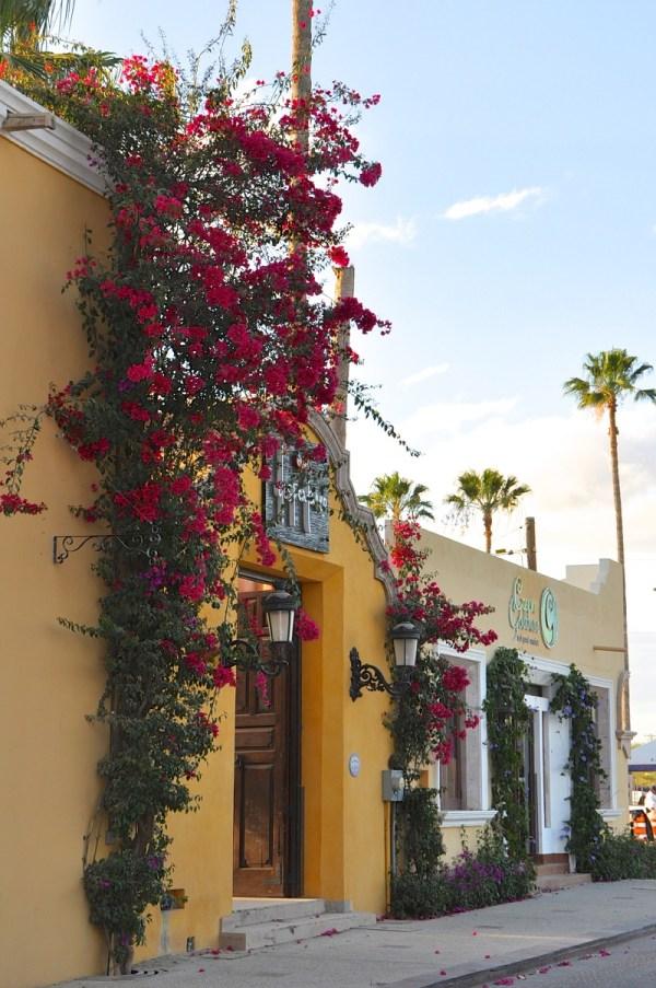 Elena Damy - Experience Art Walk In San Jose Del Cabo