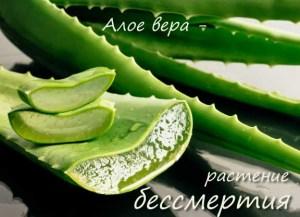 Растение бессмертия