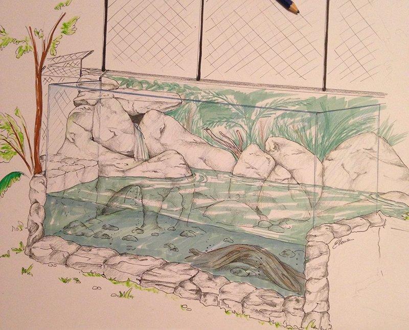 1-progetto-vasca-lontre_elenamair