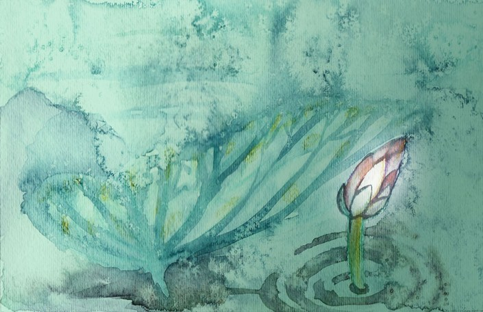 Lotus Emerging