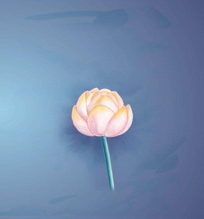 Zen Moments lotus 5