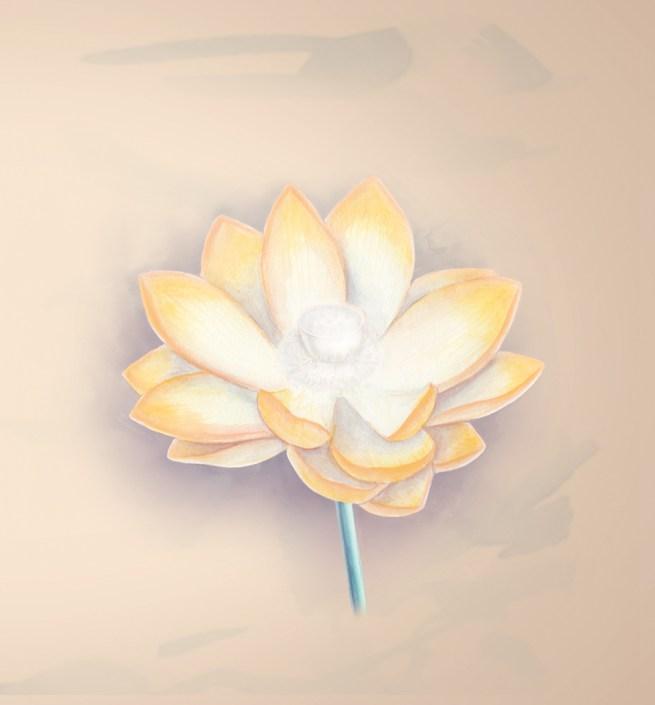 Zen Moments lotus 70