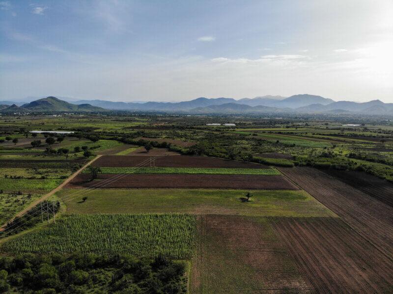 Corn crops in Magdalena Ocotlán