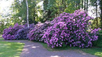 Sommer Garten Schön Welche Blumen Blühen Den Ganzen Sommer ...