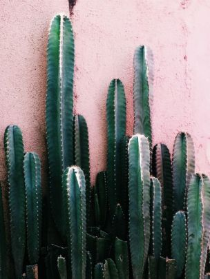 Instagram @plantsonpink
