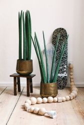 Skateboard and plants - planete-deco.fr