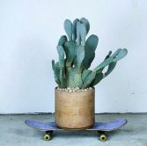 Skateboard and cactus - turbulences-deco.fr