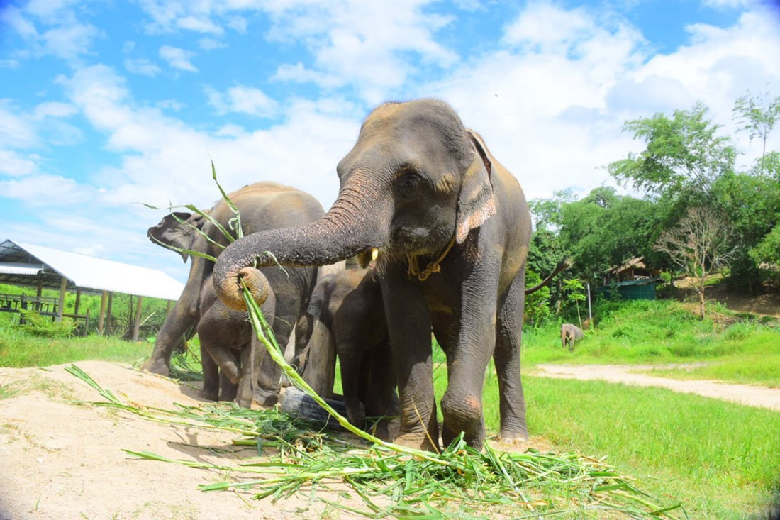 Elephant Care Gift Certificate