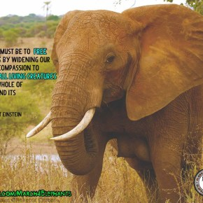 GMFER: What We Need To Realize About Elephants  Part 2