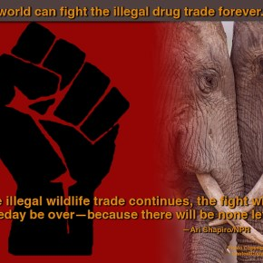 Before It's Too Late: Global March For Elephants and Rhinos