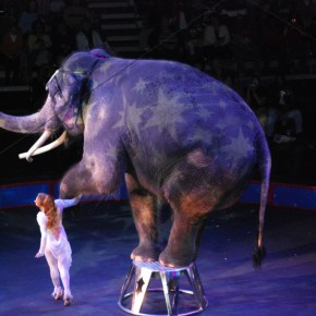 Ringling Promises to End Elephant Circus Acts By 2018