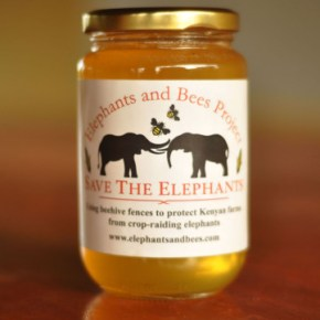 """Elephants and Bees Project"" : Scientist Lets the Elephants in Africa Provide Their Own Solution to Human Elephant Conflict Leading Researchers to Construct Bee Hive Fences Around Small Farms & the Bonus is Elephant Friendly Honey !"