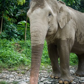 Leonardo DiCaprio Bears Witness to the Devastating Effects of Deforestation by the Palm Oil Industry in the Leuser Ecosystem While The Leonardo DiCaprio Foundation Works to Secure a Sanctuary For Sumatran Elephants in Indonesia