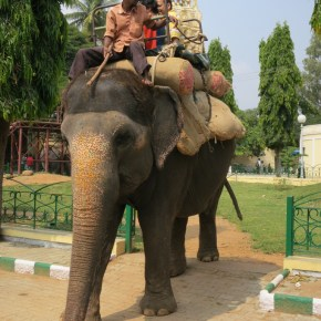 "What You Don't Know Won't Hurt You? : TripAdvisor Effectively Condones the Abuse of Wildlife as They Continue to Book Tours & Realize Profits From ""The World's Cruelest Animal Attractions"" & Those Attractions Featuring Elephants For Human Entertainment Rank # 1 : Part 1"