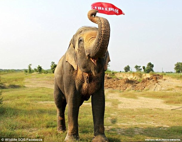 elephant-mohan-friend-not-mohan-greeting-him-wildlife-sos-facebook-from-daily-mail
