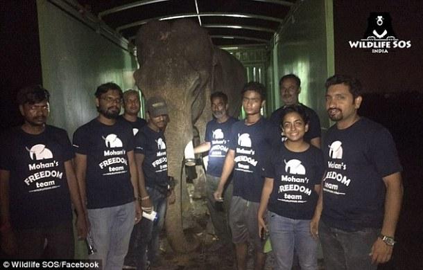 elephant-mohan-rescue-wildlife-sos-facebook-via-daily-mail