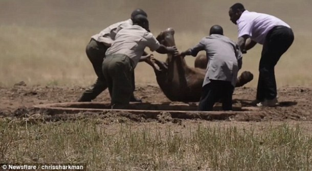 baby-elephant-trapped-waterhole-video-rescue-by-helicopter-dswt-daily-mail-newsflare-chrissharkman-3