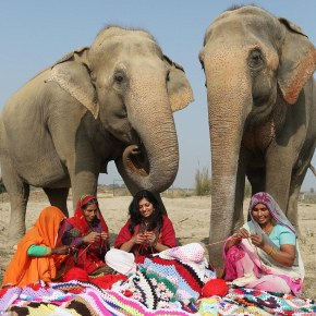 Rescued Elephants in India Receive Loving Care After Being Fitted in Warm Knitwear Donated By Ladies Spending Hours Hand Knitting & Crocheting Jumbo-Sized Sweaters and Leggings For Them