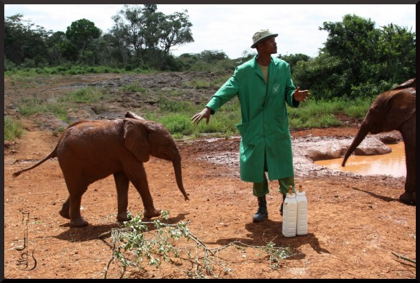 baby elephants DSWT cc flickr Milk! by GnZrG