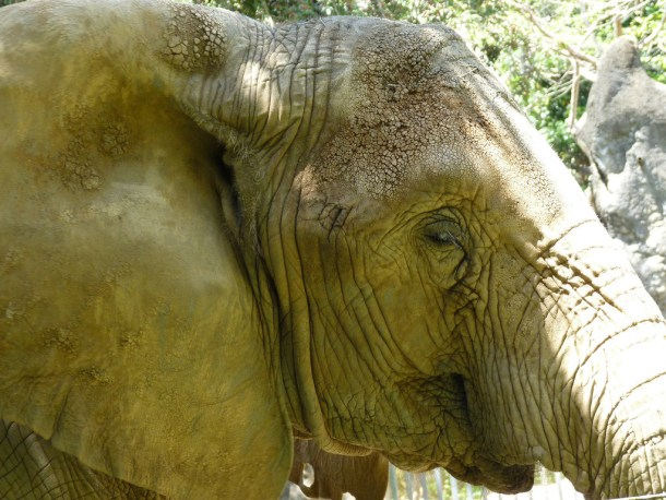 Mundi p r zoo elephant by damiandude cc flickr 16683662733_fc6d22fbfa_b