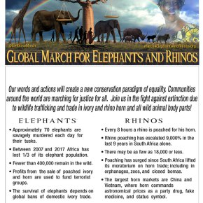 "There is Still Time to Join a Global March For Elephants and Rhinos Near You on Saturday 7 October 2017!!!  In the Meantime Watch This GMFAR VIDEO ""Elephants of the Chari River, Chad"""