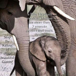 GMFER : Global March For Elephants & Rhinos 2018 is Postponed Until Spring 2019