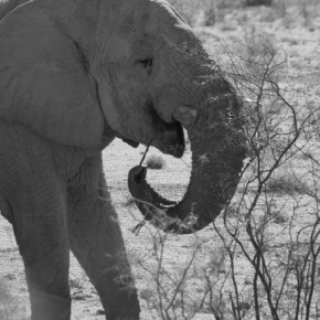 National Elephant Appreciation Day  22 September 2018 : We Love Elephants