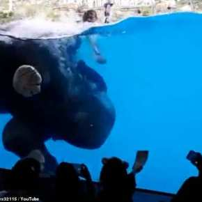 "Petition Calls For the End of ""Underwater Elephant Shows""  at a Zoo in Thailand and Rightly So, as Pressure to  Release These Performing Elephants to Elephant Sanctuary Builds"