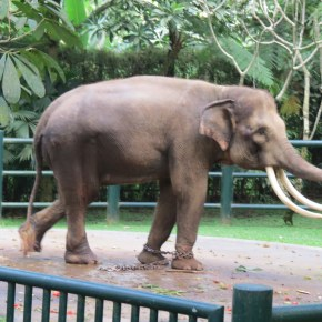 Kim Kardashian Doesn't Realize the Cruel Message She is Sending By Riding Elephants at Tourist Attraction & Lodge in Bali