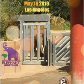 Rally Set For Saturday 18 May 2019 at the Los Angeles Zoo to Free Billy the Elephant & as a GMFER USA Event