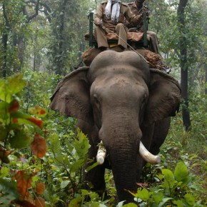 """Wildlife Photographer Vows to Never Return to Wildlife Park in India After Witnessing Horrific Elephant Abuse :  Hearing Squeals From Tortured Elephants That """"Put a Shiver Down My Spine"""""""