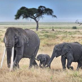 Happy 4th Birthday Elephant Spoken Here  12 August 2019