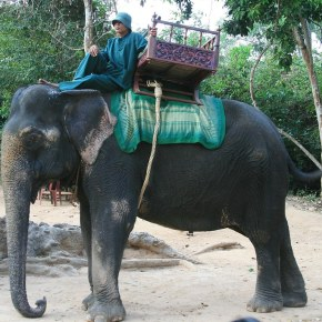 Significant Victory For Our Elephants in Cambodia as the Last Remaining Riding Elephants at Angkor Wat Will Be Retired and Relocated By Early 2020