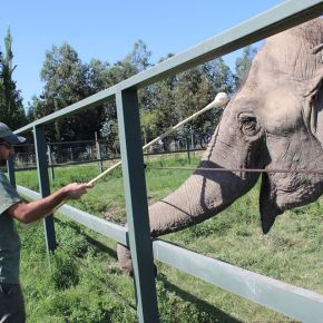 Elephant Expert Shares His Amazing Story of His Life With Captive Elephants, His Appalling Discovery of the Mistreatment of Those Elephants and His Vow to Provide Sanctuary & Healing For Captive & Performing Elephants Worldwide : Part 2