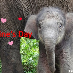 The Perfect Valentine For Those Who Love Elephants